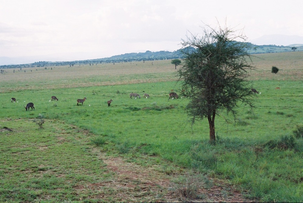 Animals, Apoka, Kidepo, Uganda