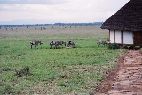 Zebras, Apoka, Kidepo
